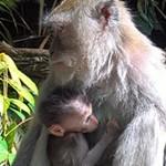 Een vakantie in Azië met kinderen? Ik zeg Bali!