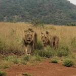 Zuid-Afrika in 2,5 week