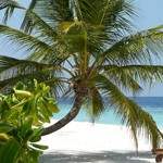 Relaxen op Palm Cove